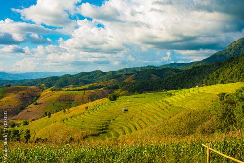 Foto op Plexiglas Rijstvelden Green Terraced Rice Field in Pa Pong Pieng , Mae Chaem, Chiang Mai, Thailand