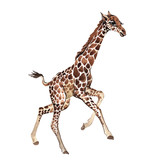 Exotic giraffe wild animal in a watercolor style isolated. Full name of the animal: camelopard. Aquarelle wild animal for background, texture, wrapper pattern or tattoo.