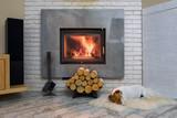 Jack russel terrier - 170847607