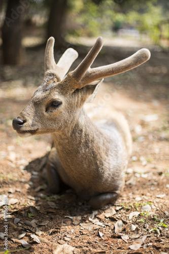 Fotobehang Hert deer 2