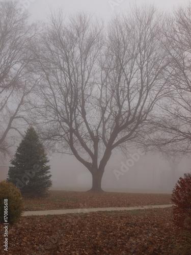 Fotobehang Diepbruine Foggy Trees