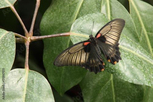 Fotobehang Vlinder butterfly 1