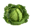 Quadro Savoy cabbage isolated without shadow