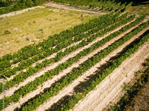 Fotobehang Honing Landscape Of Vineyard