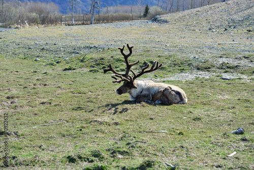 Fotobehang Hert Trip to Alaska, USA