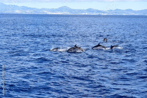Fotobehang Dolfijn Bottlenose Dolphins