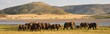 Leinwandbild Motiv Elephant herd in beautiful surroundings