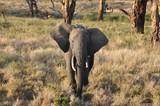 Elephant curious about me