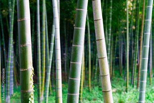 Fotobehang Bamboe 花物語