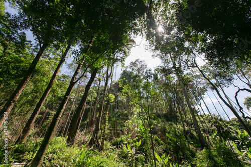 Fotobehang Weg in bos Forest trees. nature green wood sunlight backgrounds