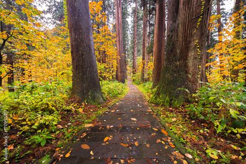 Papiers peints Route dans la forêt Weg durch den Wald, Japan