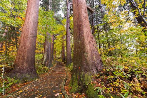 Fotobehang Weg in bos Blätter auf dem Pfad im Wald, Japan