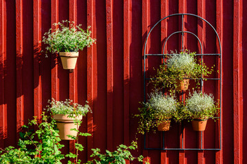 Flowerpots hanging on red wooden wall of a shed.