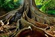 Hawaii Kauai Allerton Garden fig tree trunks