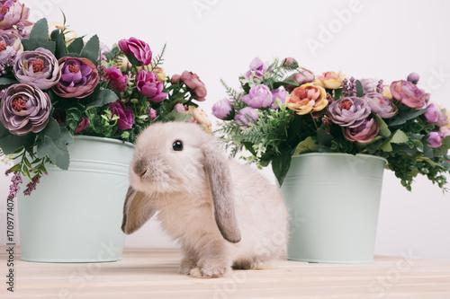 krolik-i-kwiaty