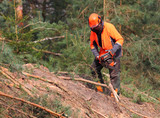 The Lumberjack working in a forest. Harvest of timber. Firewood as a renewable energy source. Agriculture and forestry theme. People at work.  - 170981085