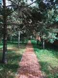 Fototapety Direct road through a pine forest