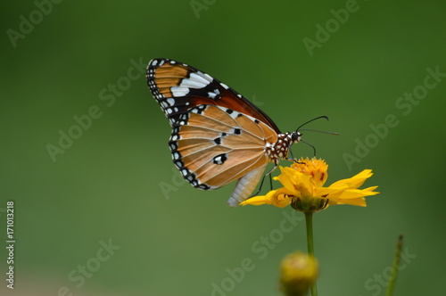 Aluminium Vlinder butterfly and flowers