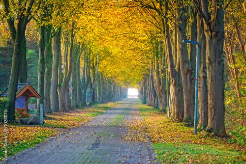 Fotobehang Honing autumn in East Frisia
