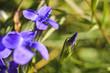 blue flower close-up, macro