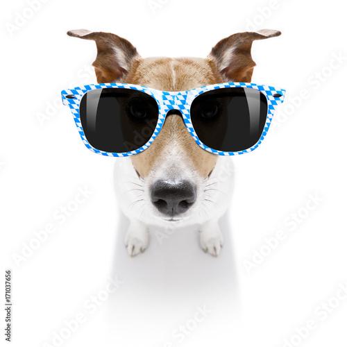 Fotobehang Crazy dog bavarian dog