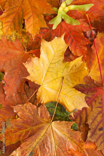 Foto op Canvas Baksteen Autumn leaves on white background. Place for text.