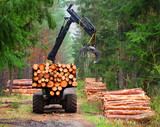Lumberjack with modern harvester working in a forest. Wood as a source renewable energy.  - 171039621