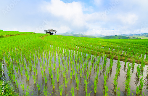 Fotobehang Rijstvelden view of green rice fields terrace mountain with cottage in countryside Land with grown plants of paddy and sea of fog at Pa Pong Piang, Thailand