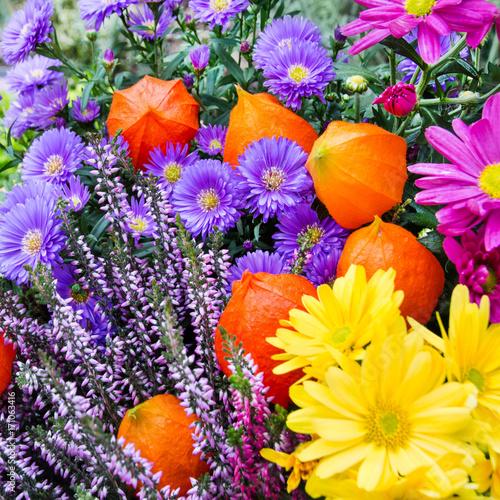 Blumen - Garten