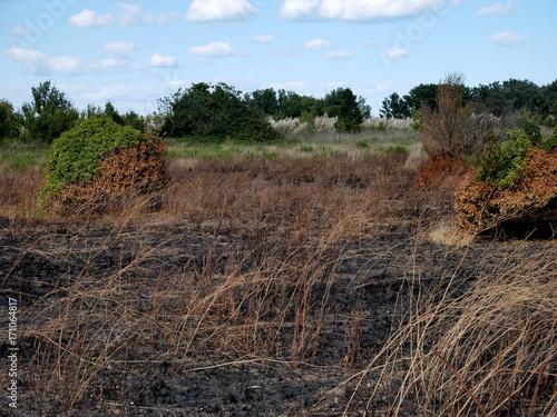 Fotobehang Diepbruine Incendie dans la garrigue en été
