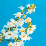 Blooming Flower minimal design art - 171065801