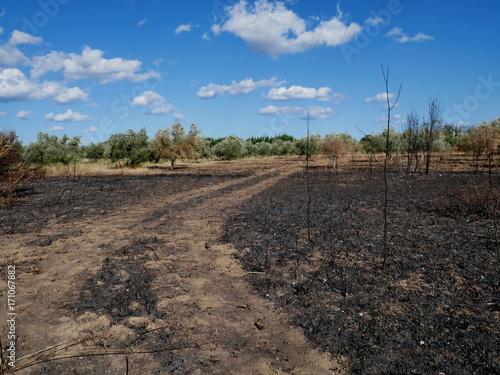 Fotobehang Cappuccino Incendie dans la garrigue en été