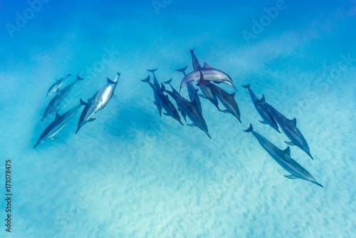 Fotobehang Dolfijn Dolphin Pod