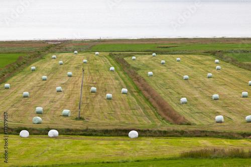 Foto op Canvas Europa White Hay Rolls on a Green Field of Iceland