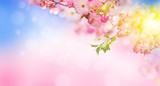 Flowers background with amazing spring sakura with butterflies. Flowers of cherries. - 171081006