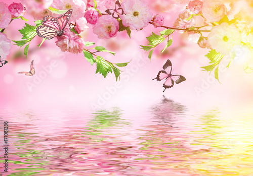 Flowers background with amazing spring sakura with butterflies. Flowers of cherries. - 171081286