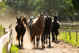 Herd of horses walking to the pasture in the morning - 171090253