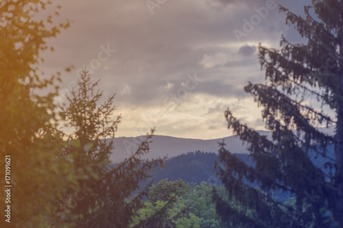 View at forest landscape - 171091621