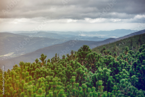 View at forest landscape - 171091646