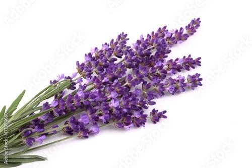 Papiers peints Lavande Lavender.