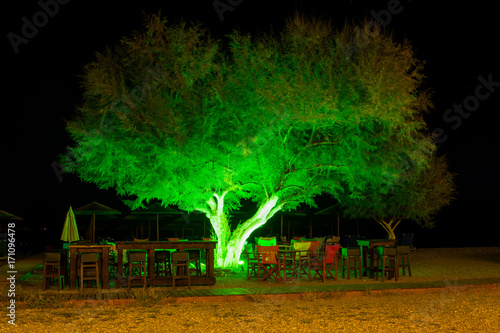 Night view of an outdoor bar under a tree illuminated with green color Poster