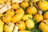 Raw pumpkins background