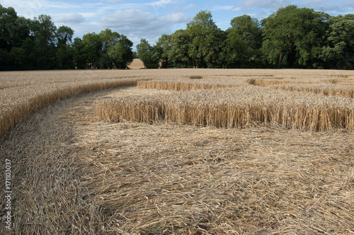 Fotobehang UFO Crop circle at Hannington, Wiltshire, England, viewed from ground level