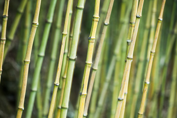 Green bamboo trunks, background photo