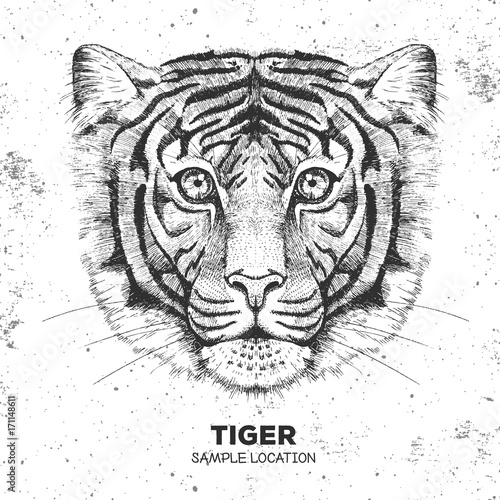 Fototapeta Hipster animal tiger. Hand drawing Muzzle of tiger