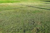 Fototapety mowed green grass lawn field