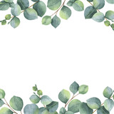 Watercolor vector green floral card with silver dollar eucalyptus leaves and branches isolated on white background. - 171160633