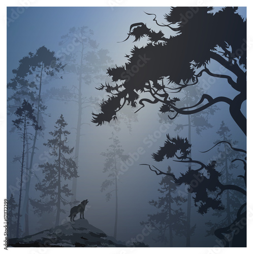 vector illustration with a silhouette of a night forest and a howling wolf, blue tones