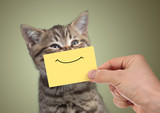 funny happy young cat portrait with smile on cardboard - 171173640