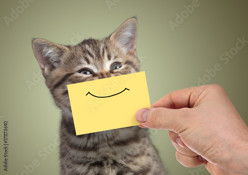 funny happy young cat portrait with smile on cardboard Poster